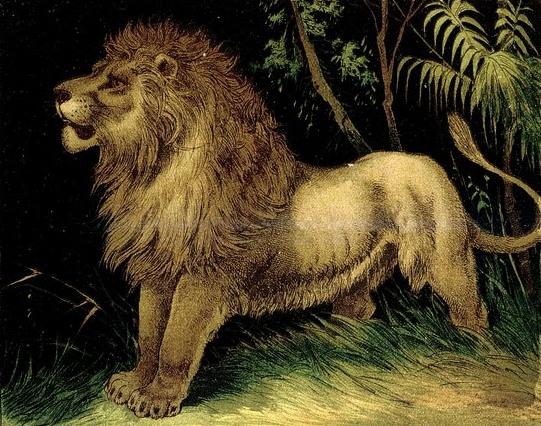 lion-images-04